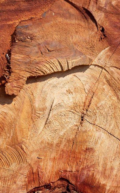 Wooden stump background.